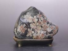 紅白菊花石