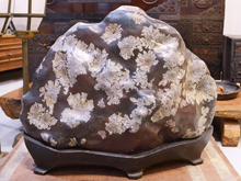 茶田岩 菊花石